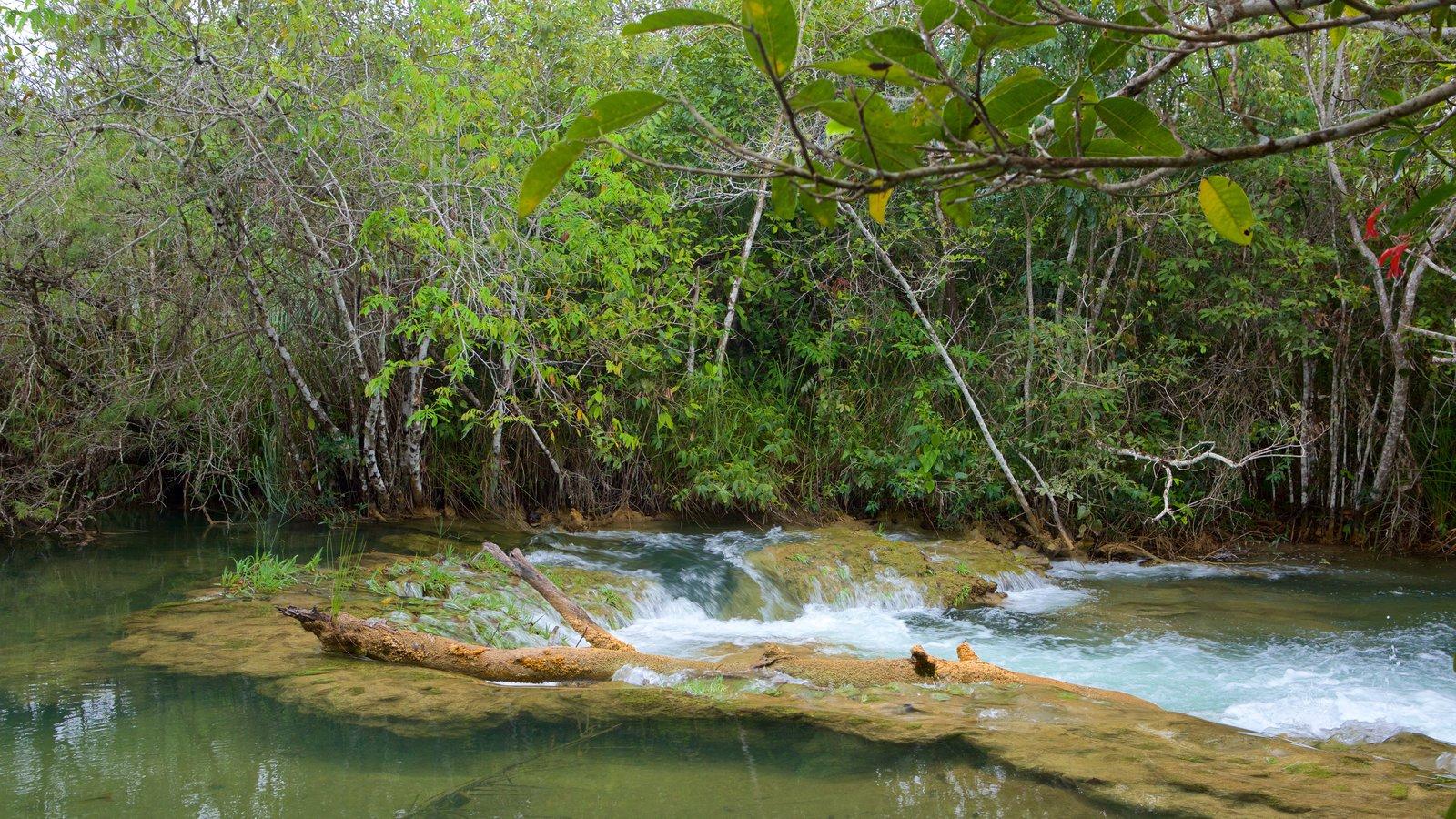 Parque Ecológico Rio Formoso caracterizando um rio ou córrego, floresta tropical e mangues
