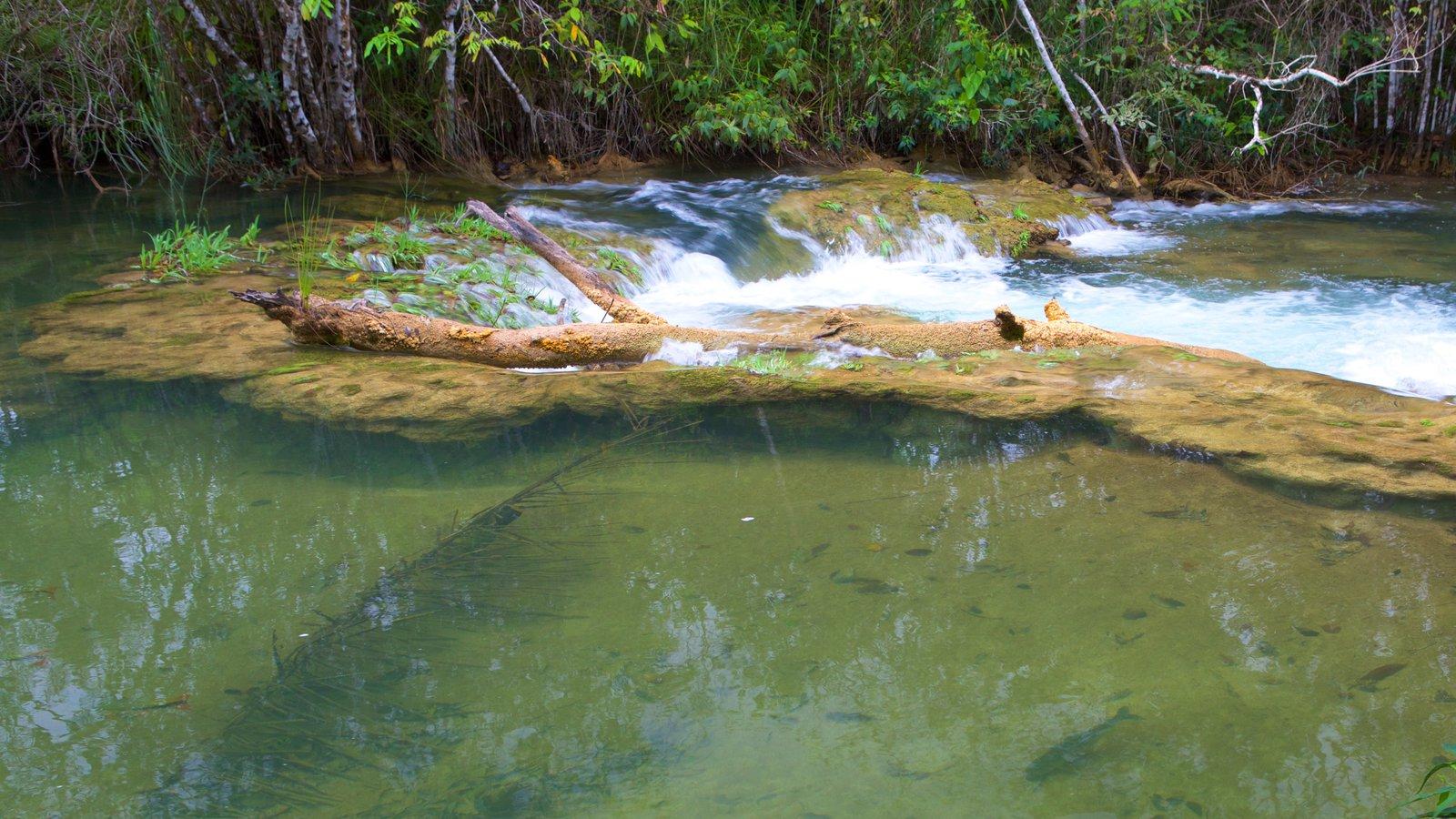 Parque Ecológico Rio Formoso que inclui córrego, mangues e um rio ou córrego