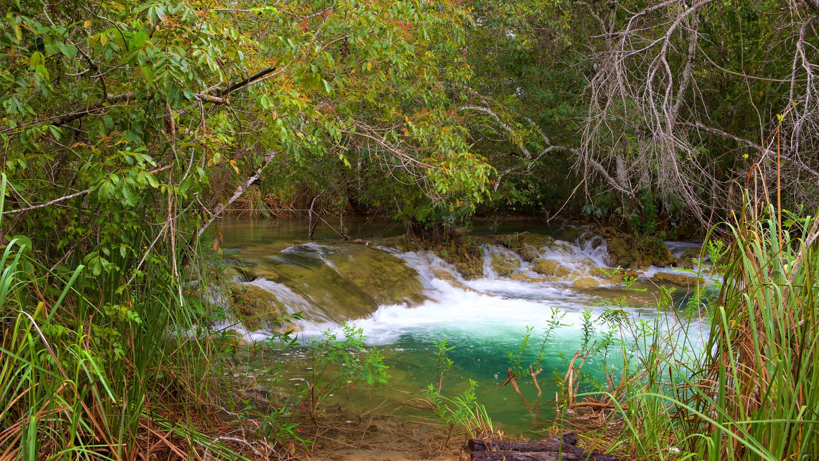 Parque Ecológico Rio Formoso que inclui mangues, floresta tropical e um rio ou córrego