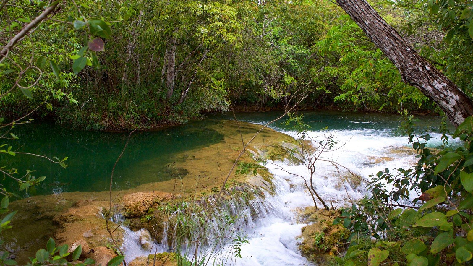 Parque Ecológico Rio Formoso que inclui um rio ou córrego, mangues e córrego