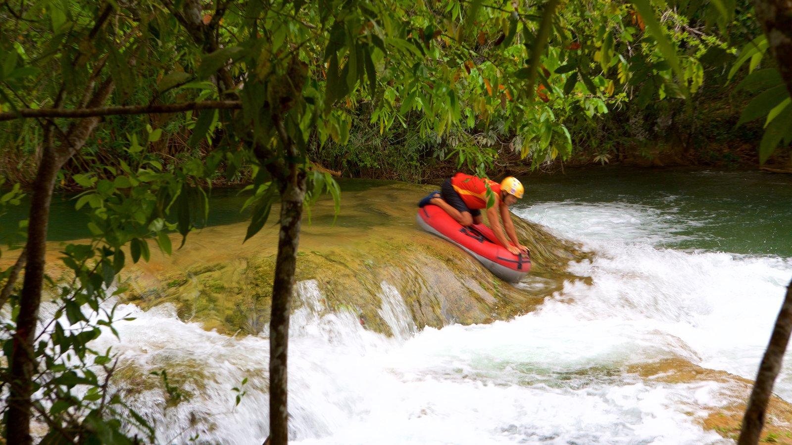 Parque Ecológico Rio Formoso caracterizando córrego, rafting e um rio ou córrego