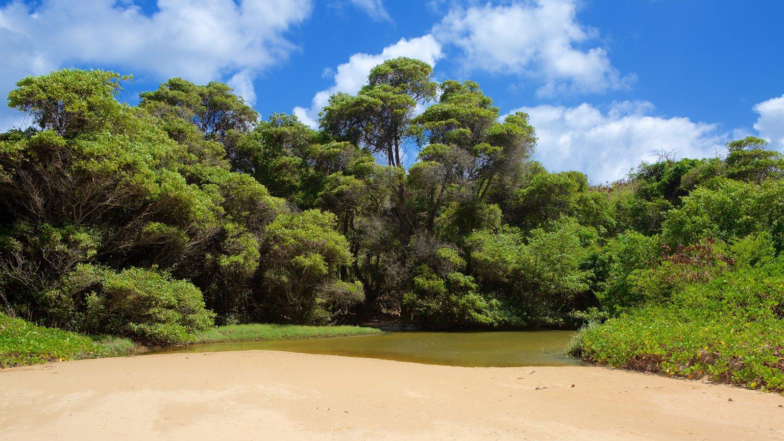 Praia do Sueste mostrando um lago ou charco, floresta tropical e uma praia de areia