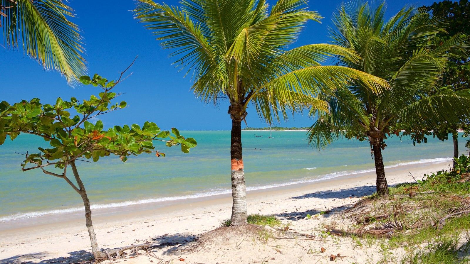 Praia do Mutá mostrando uma praia, cenas tropicais e paisagens litorâneas