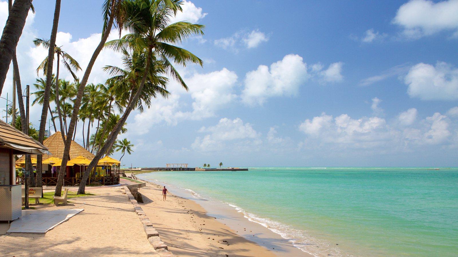 Praia de Ponta Verde que inclui cenas tropicais, uma praia e paisagens litorâneas