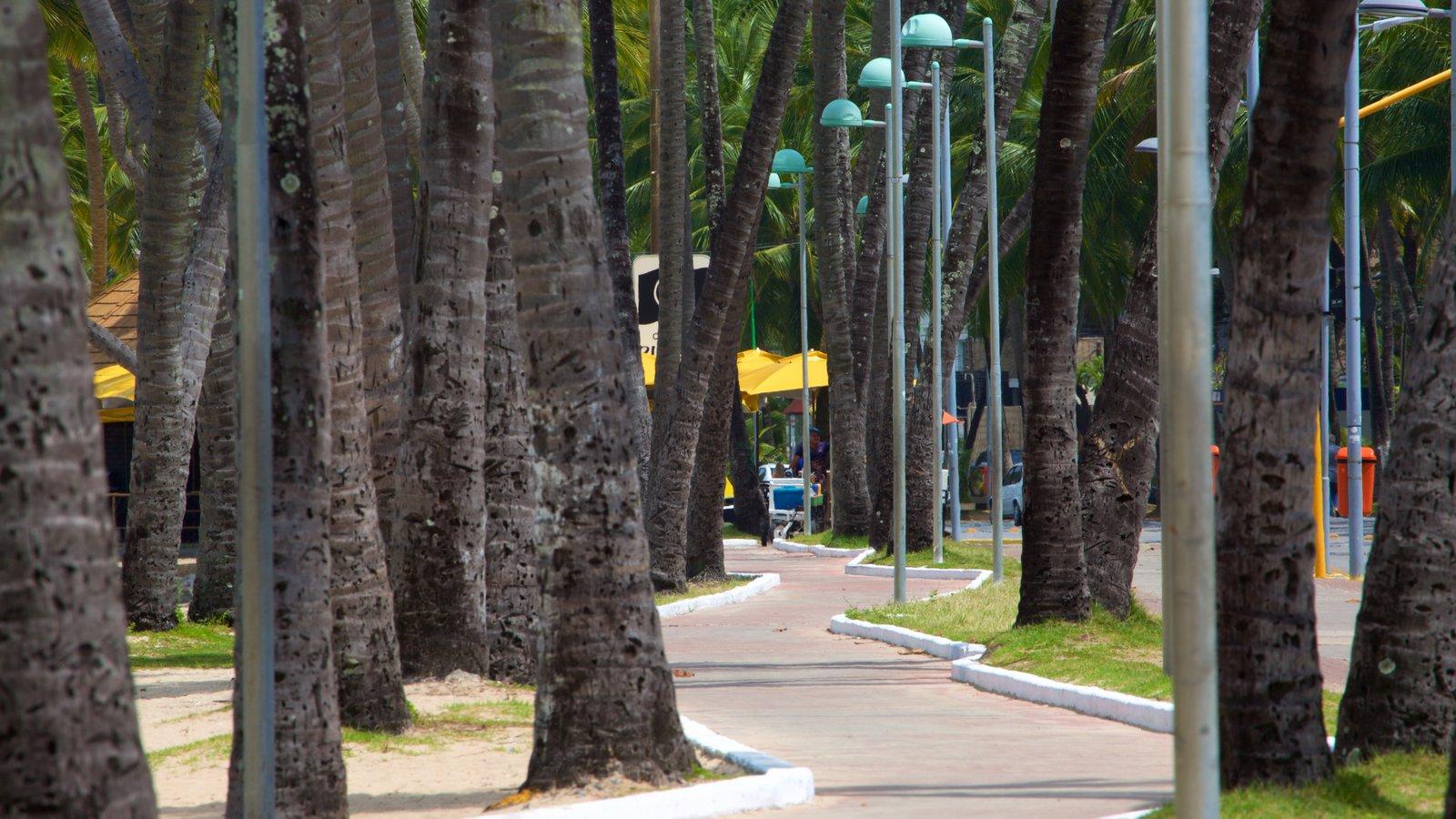 Praia de Ponta Verde que inclui um parque