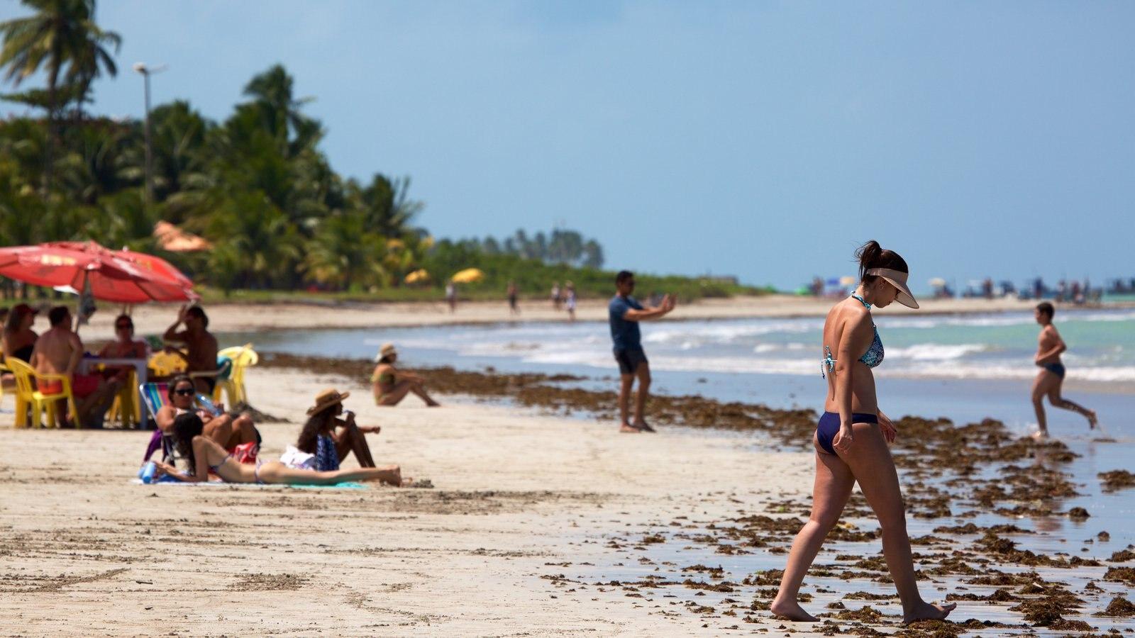 Praia de Paripueira caracterizando cenas tropicais, uma praia de areia e paisagens litorâneas