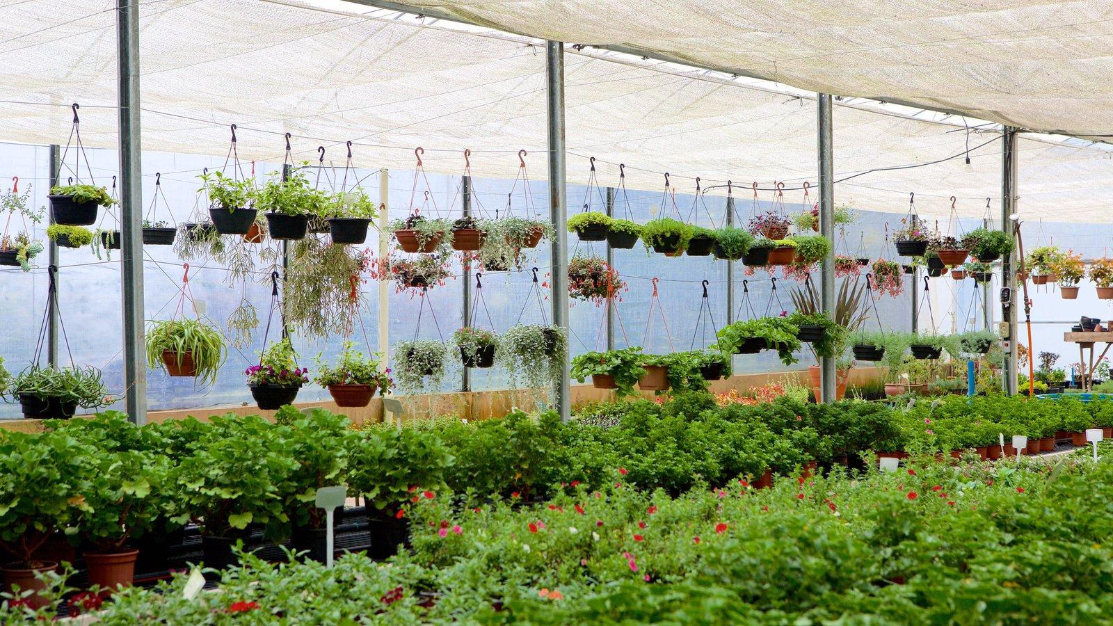 Le Jardin Parque de Lavanda mostrando flores