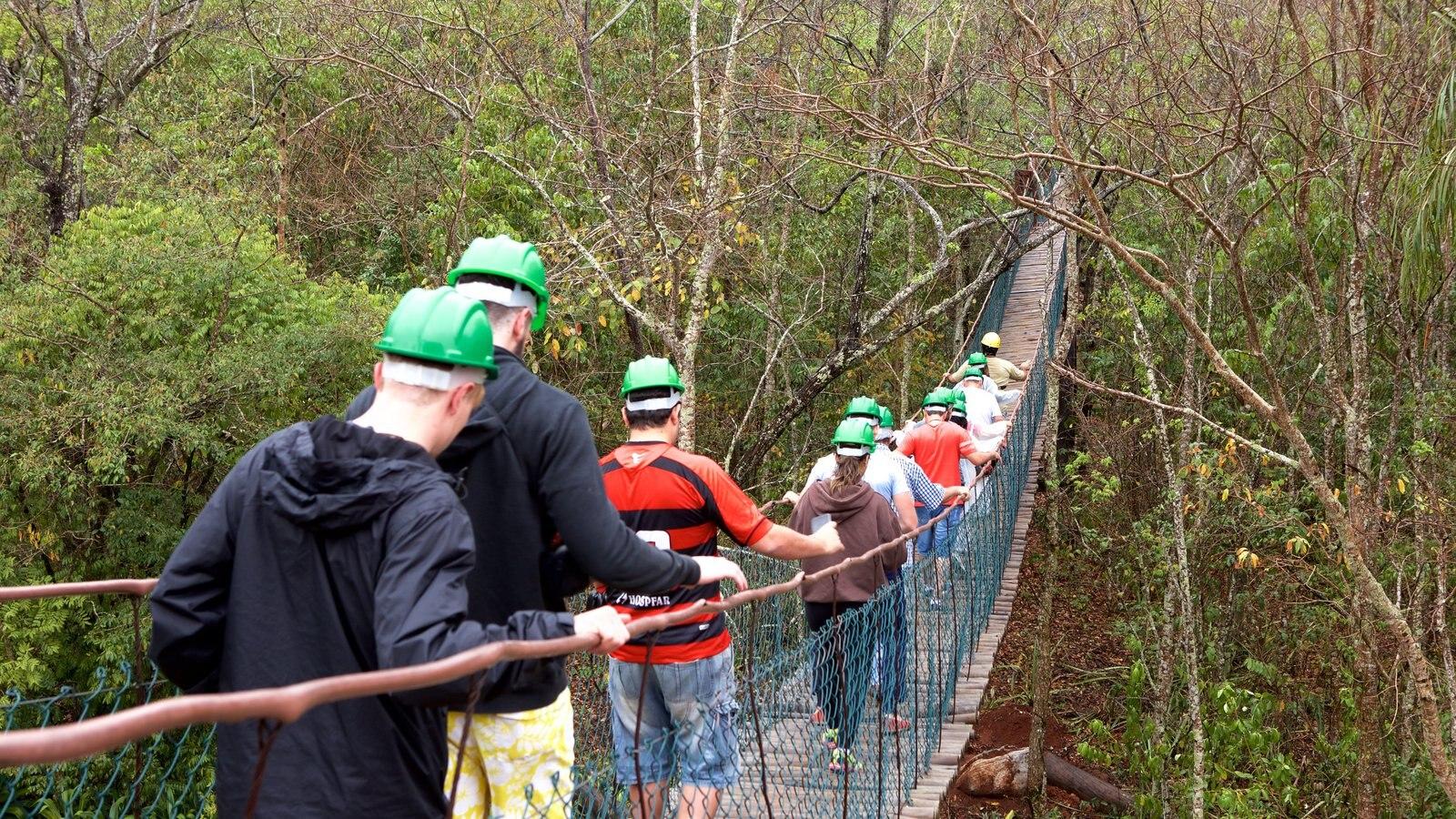 Grutas de São Miguel que inclui florestas e uma ponte suspensa ou passarela entre as árvores assim como um pequeno grupo de pessoas