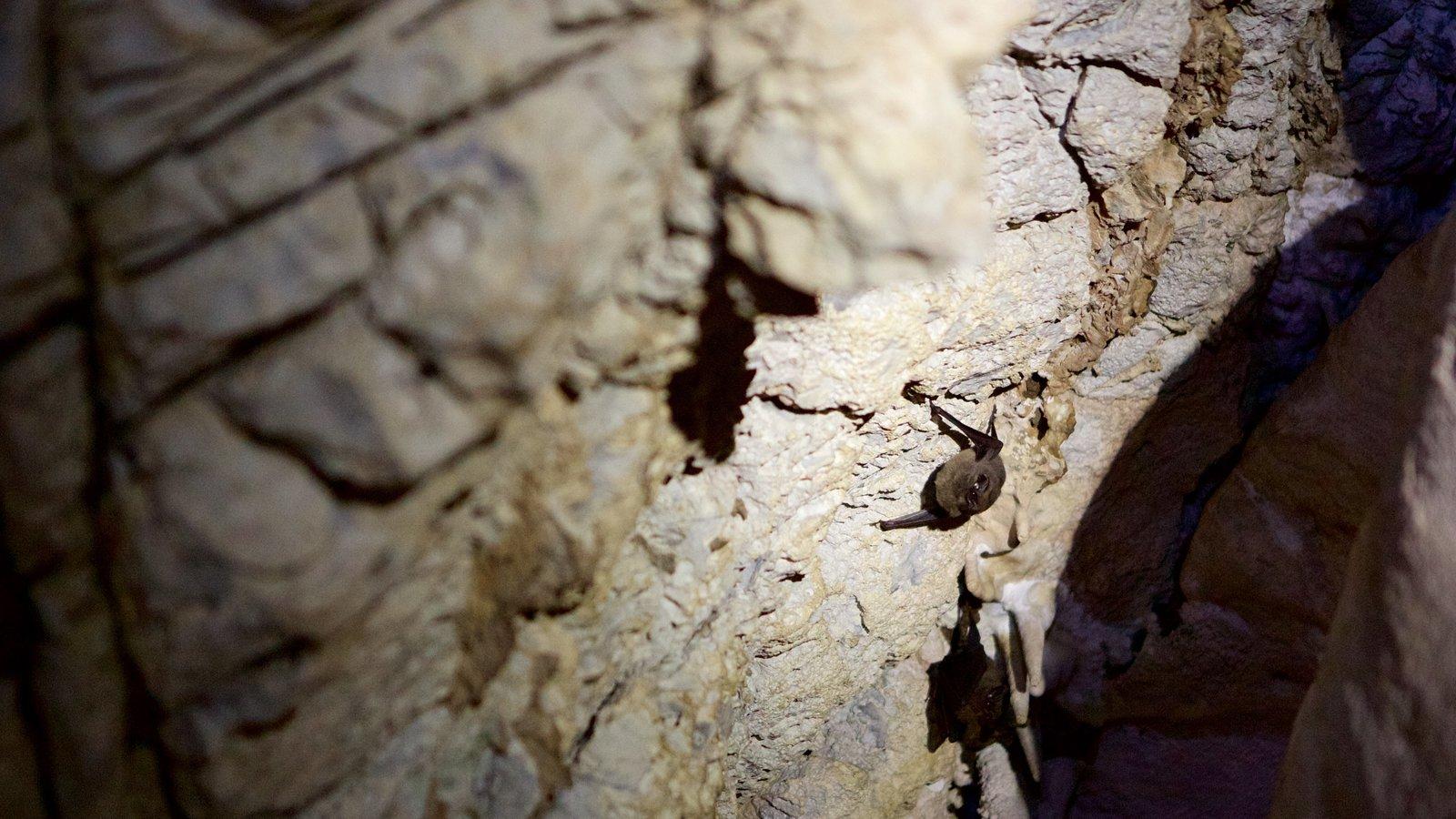 Grutas de São Miguel caracterizando animais, cavernas e cenas noturnas