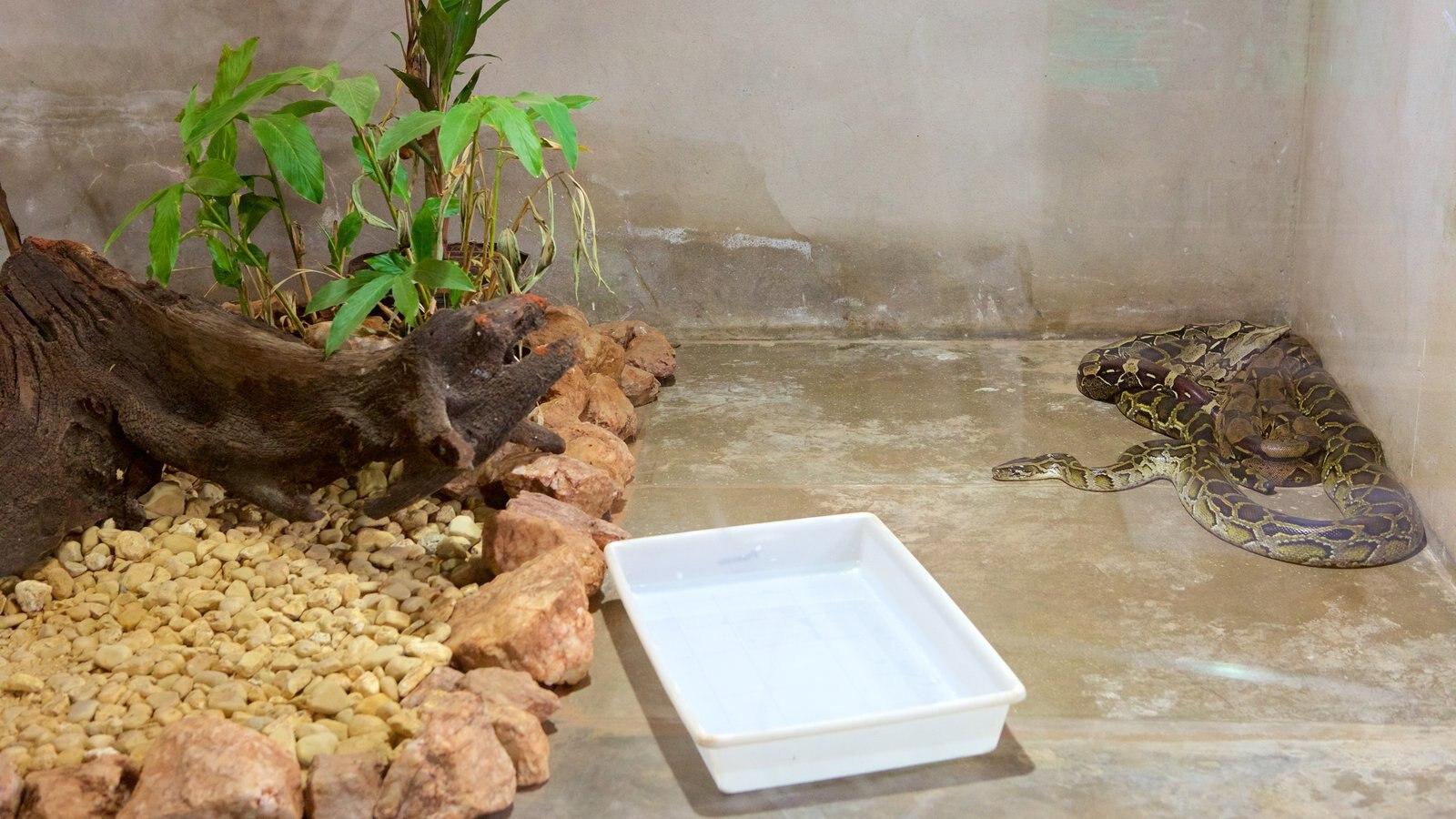 Projeto Jiboia caracterizando animais perigosos, animais de zoológico e vistas internas
