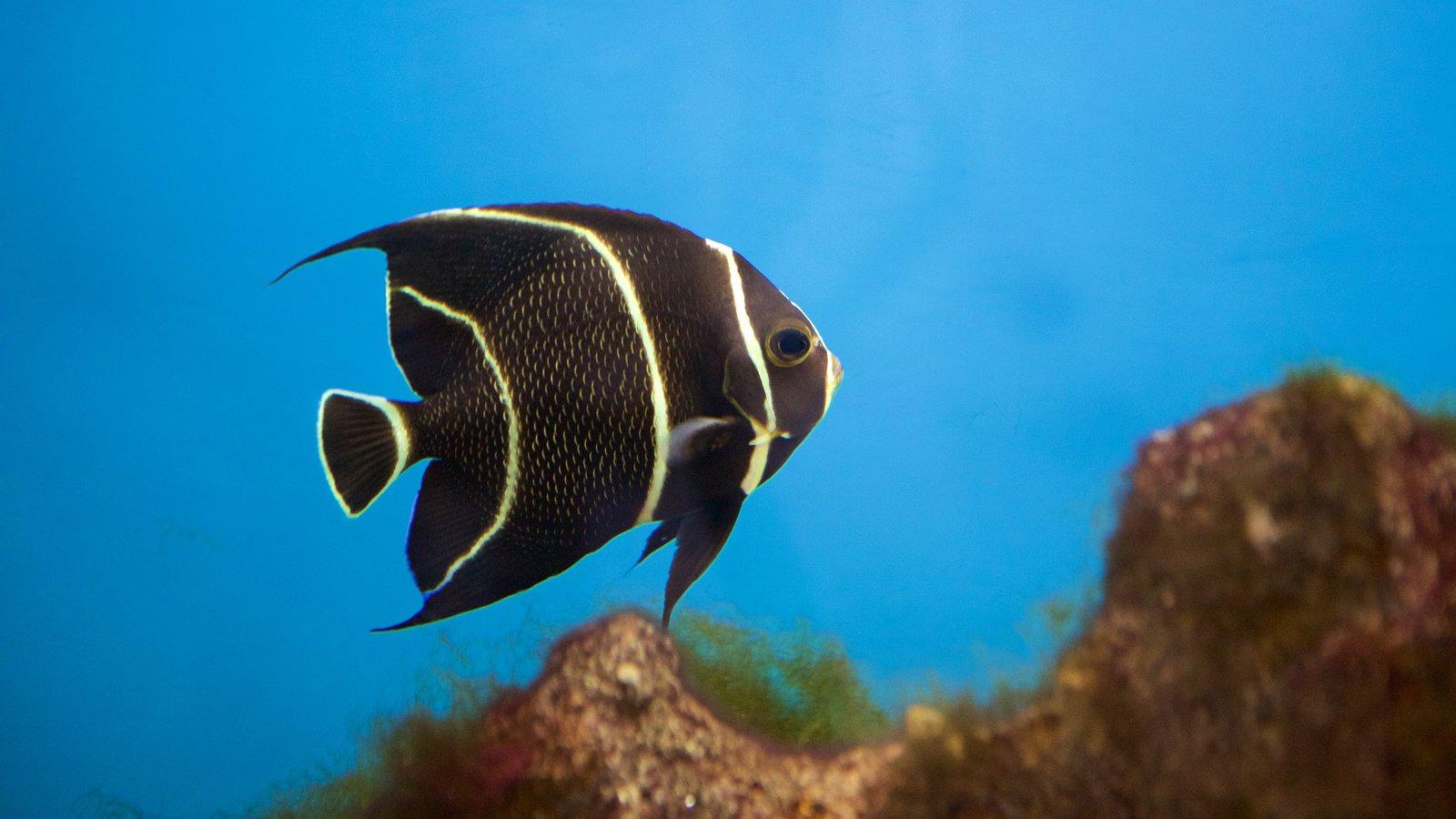 Escritório do Projeto Hippocampus caracterizando vida marinha