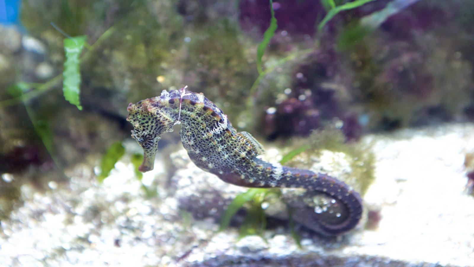 Escritório do Projeto Hippocampus que inclui vida marinha