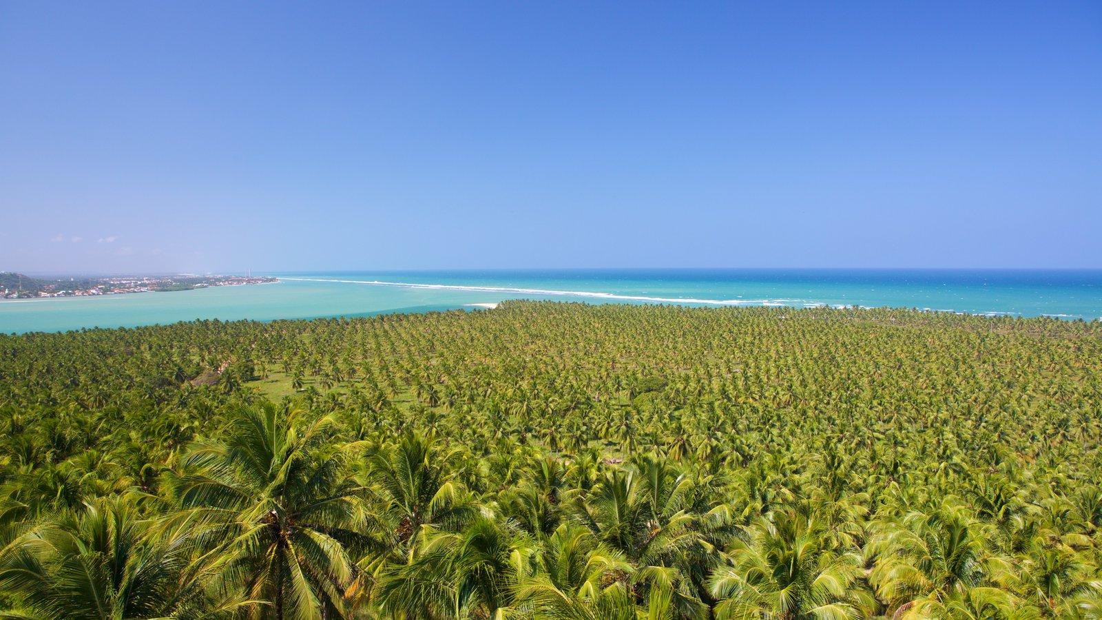 Maceió caracterizando cenas tropicais e paisagens litorâneas