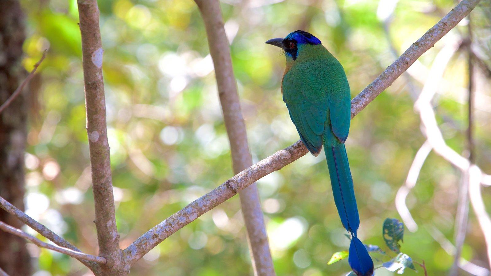 Bonito que inclui vida das aves