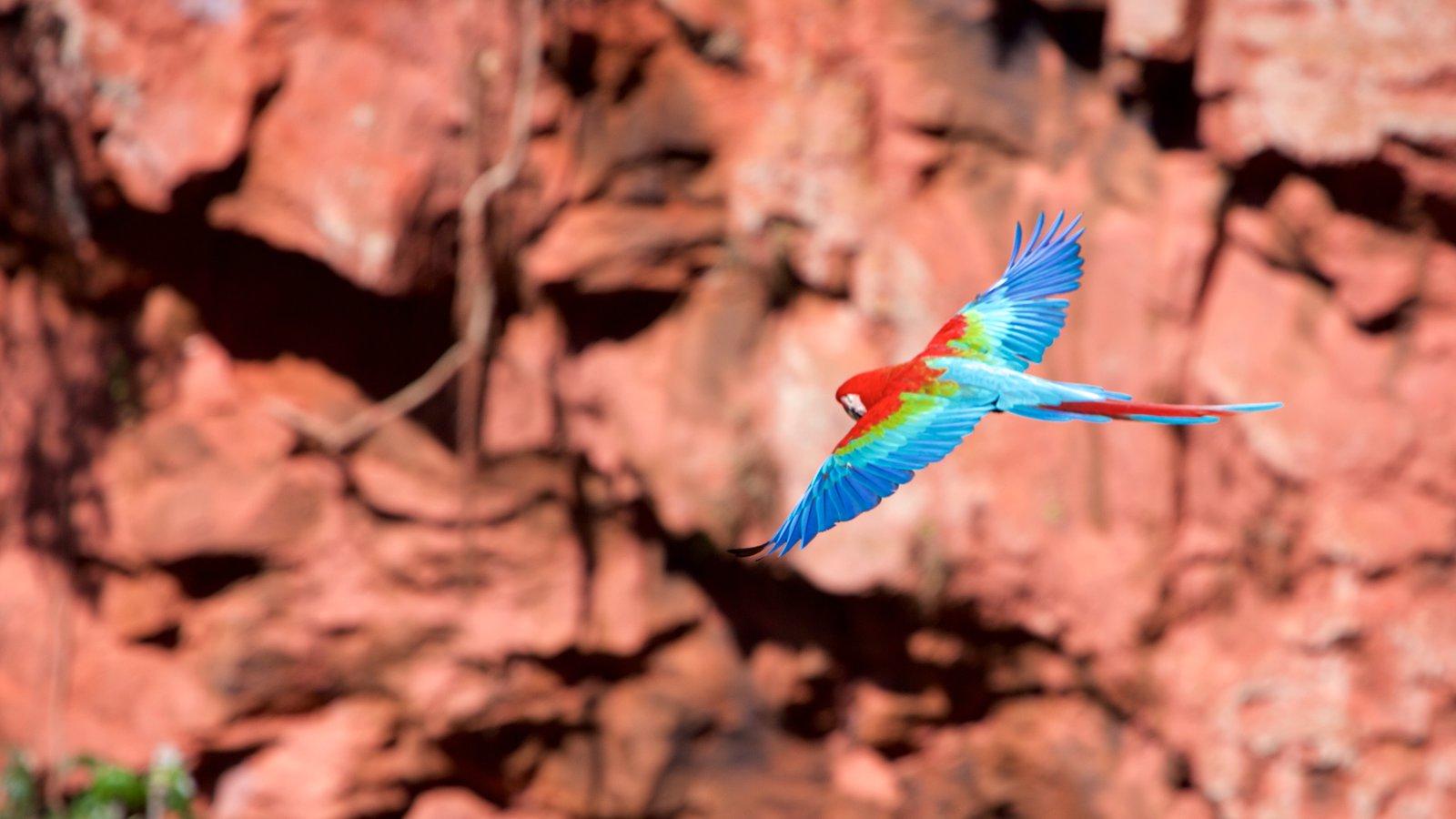 Bonito mostrando vida das aves