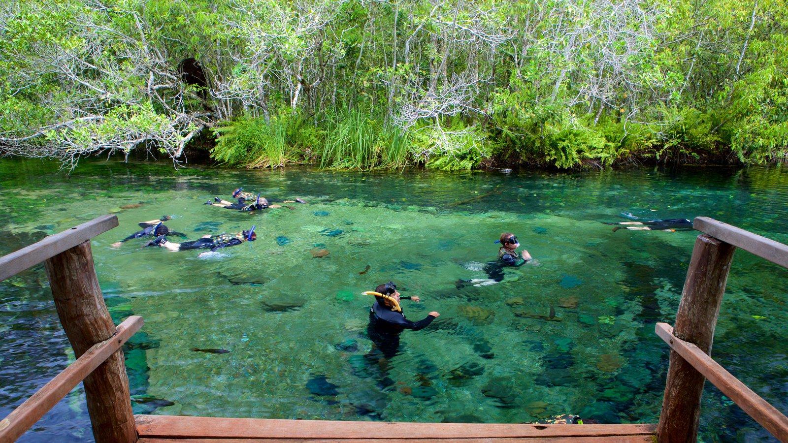 Bonito que inclui snorkel, natação e um rio ou córrego