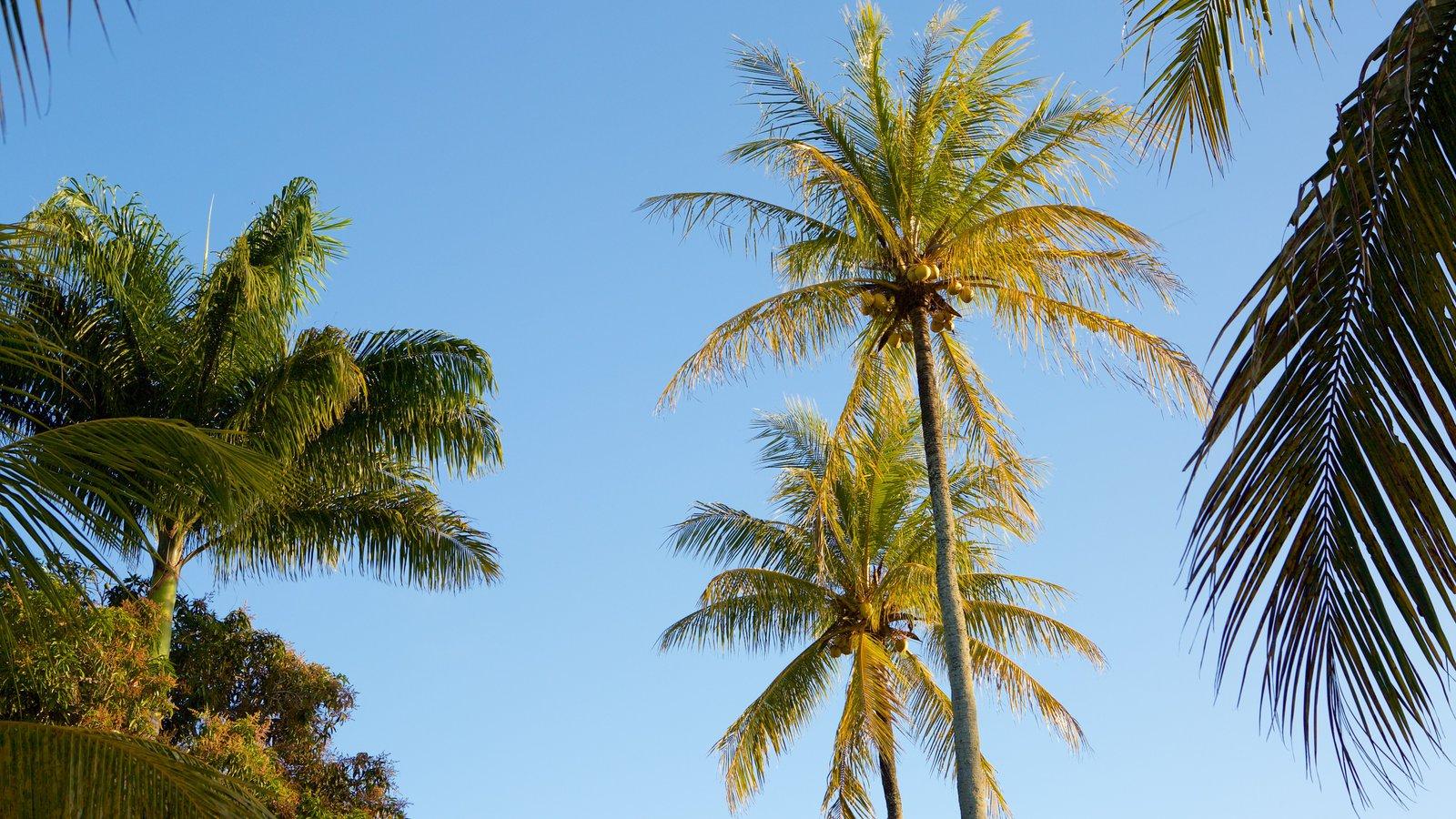 Porto Seguro caracterizando cenas tropicais