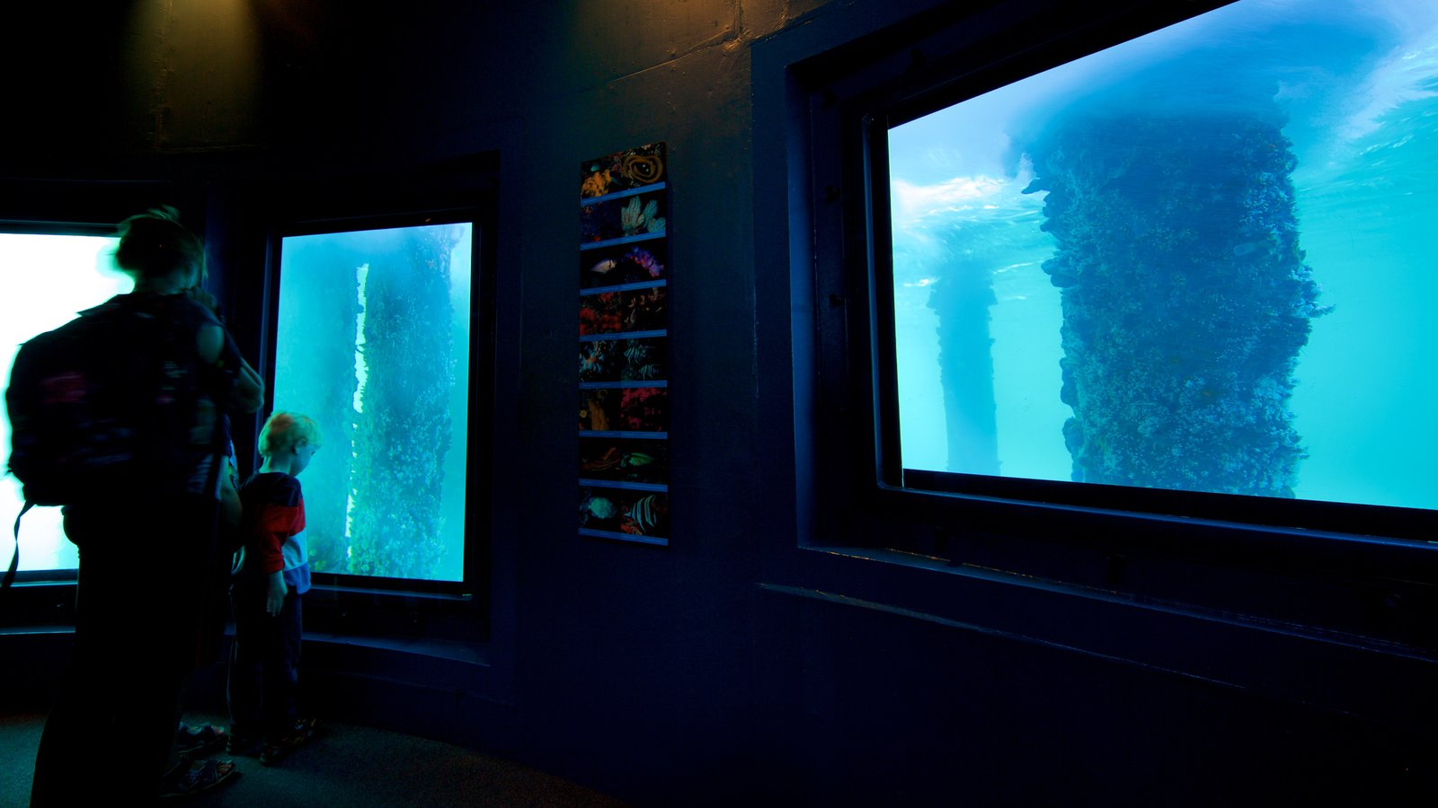 Busselton Jetty Underwater Observatory showing marine life and interior views as well as a family