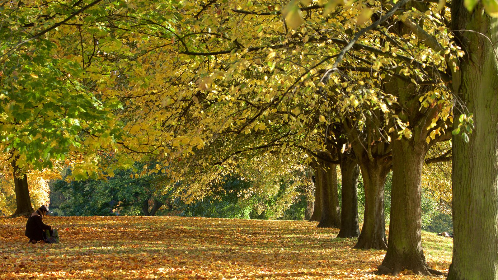 Fall Pictures: View Images of Kensington Gardens