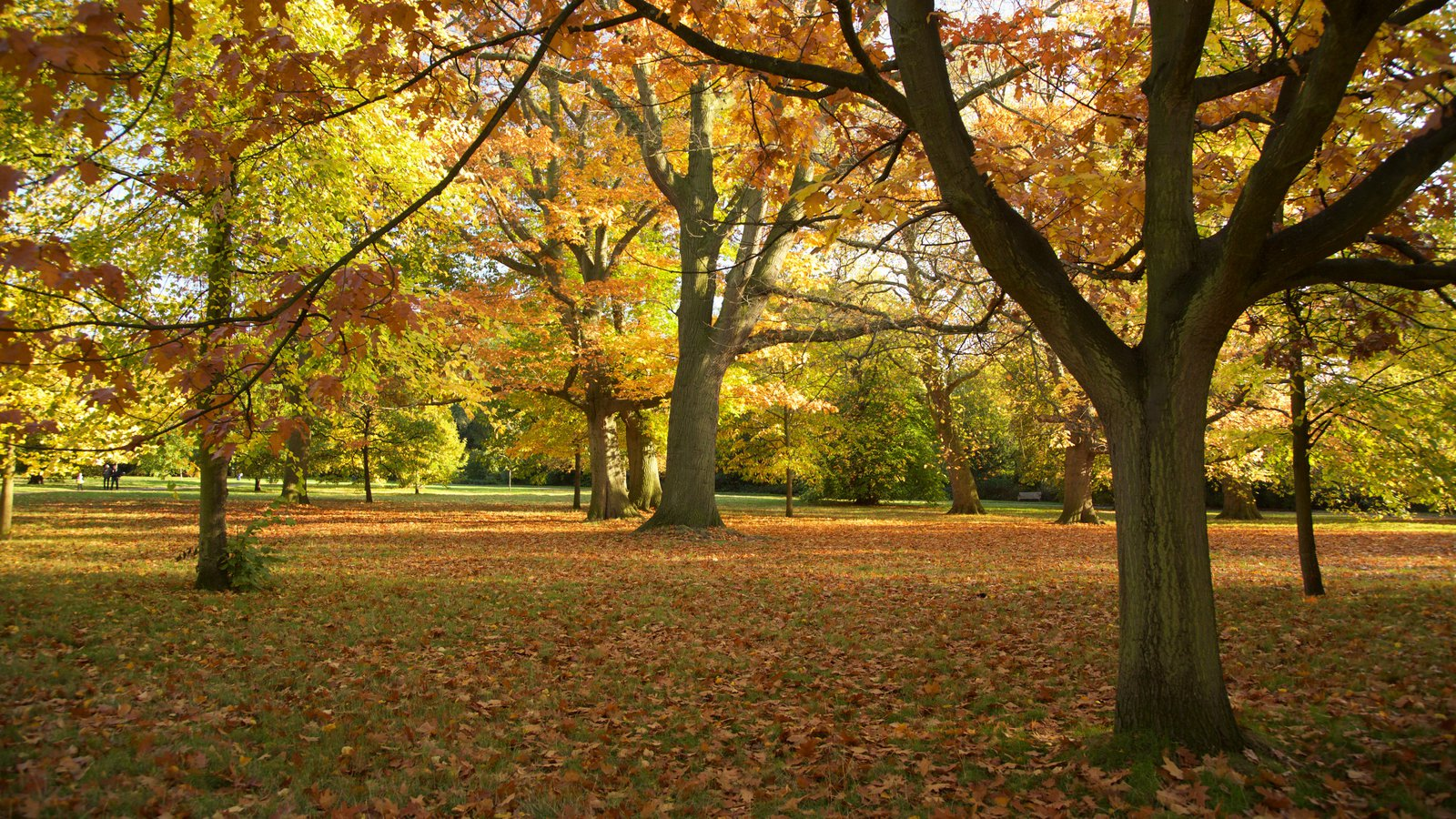 Fall Pictures: View Images of Greater London