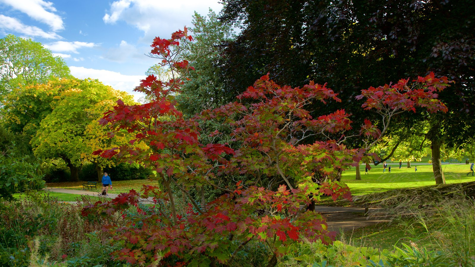 Sheffield Botanical Gardens Pictures: View Photos & Images of ...