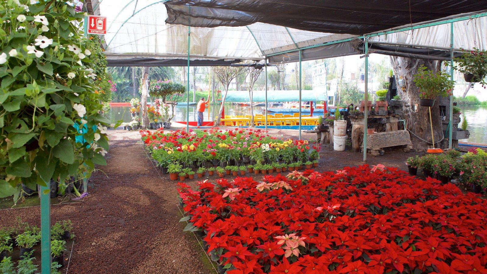 Fotos de xochimilco ver fotos e im genes de xochimilco for Jardin xochimilco
