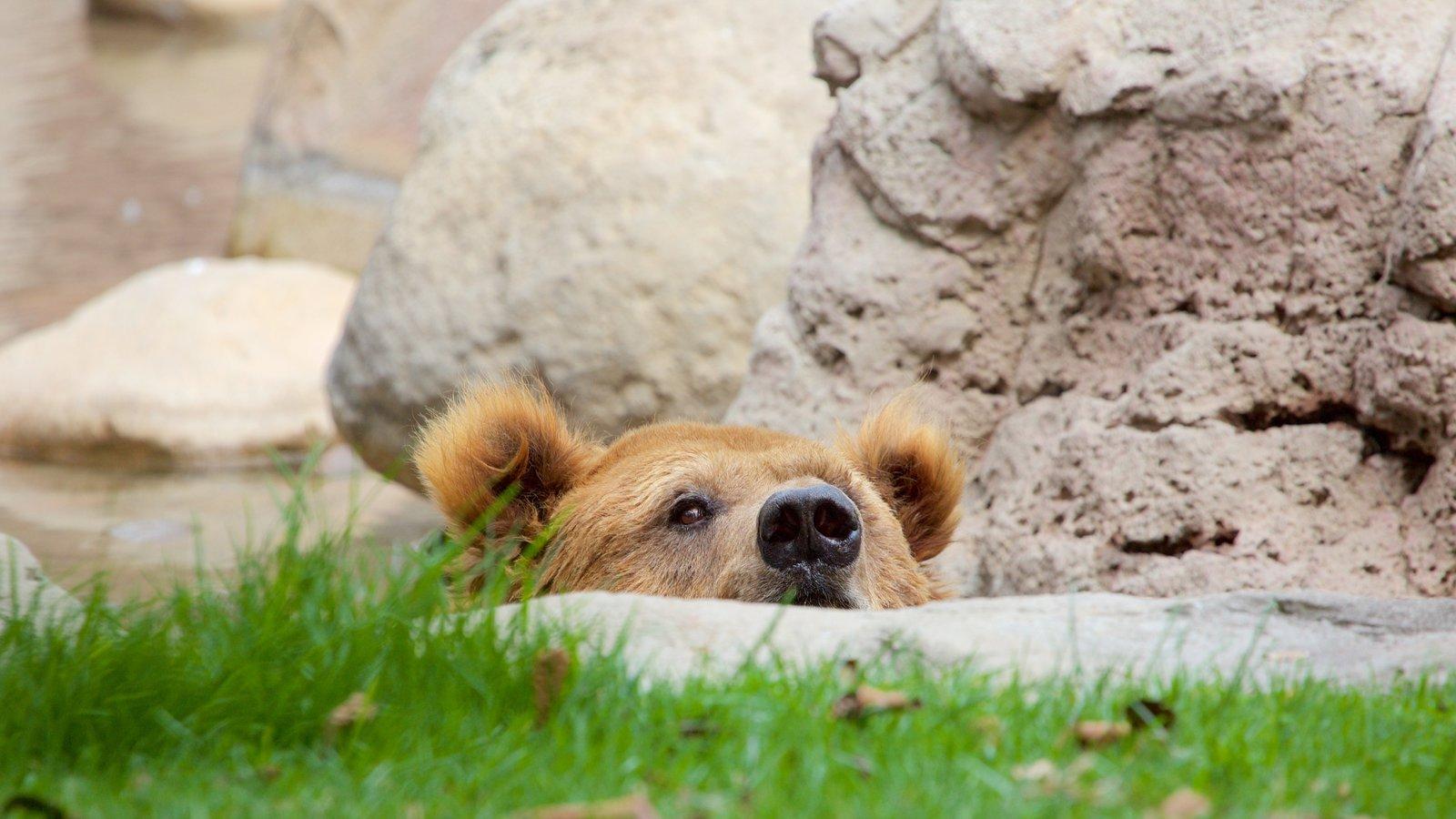 Parque Zoologico de Chapultepec showing dangerous animals and zoo animals