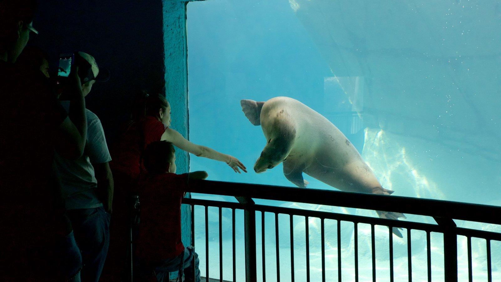 Parque Zoologico de Chapultepec featuring interior views, marine life and zoo animals