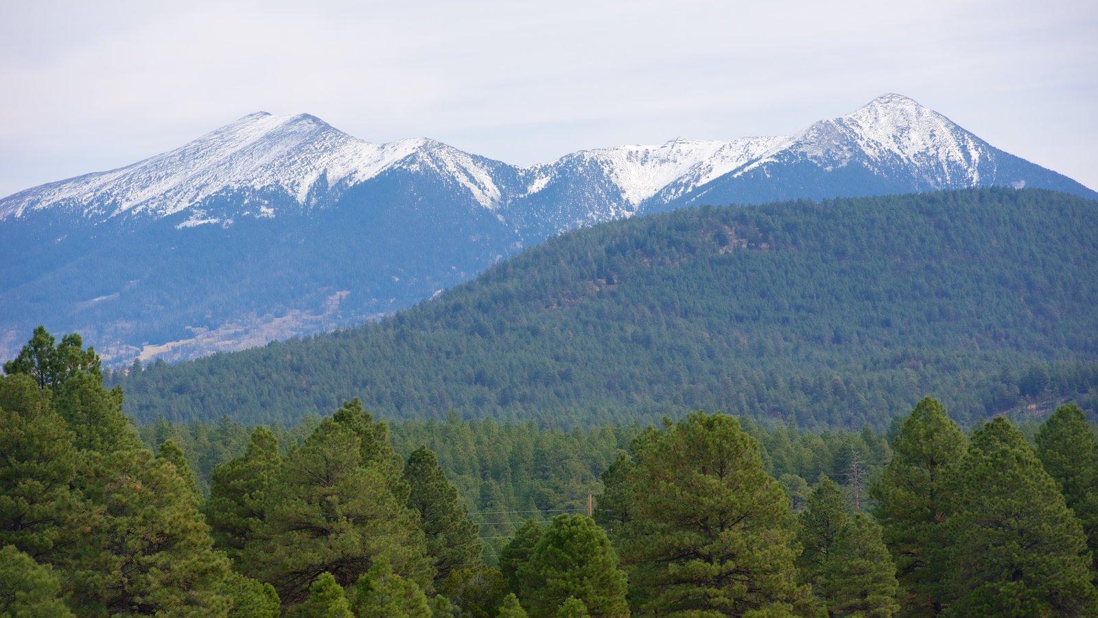 Humphreys Peak caracterizando cenas de floresta e montanhas
