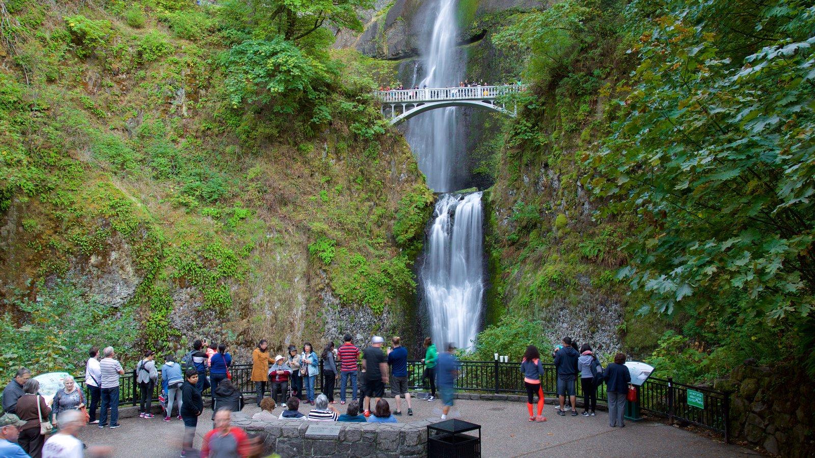 Cascadas de Multnomah que incluye una cascada y vistas y también un gran grupo de personas