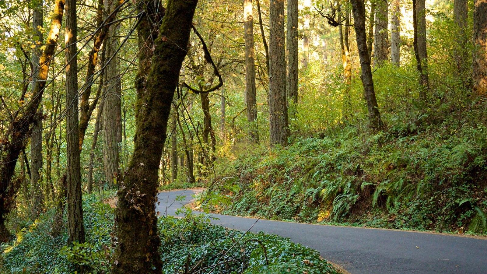 Eugene ofreciendo selva
