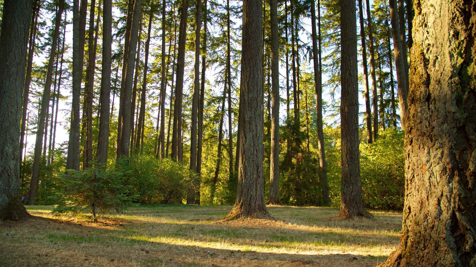 Hendricks Park ofreciendo bosques