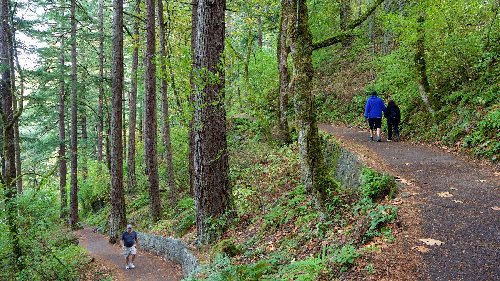 Cataratas de Wahkeena que inclui floresta tropical e escalada ou caminhada
