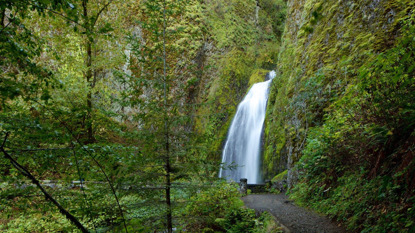 Cascadas Wahkeena mostrando una catarata y selva
