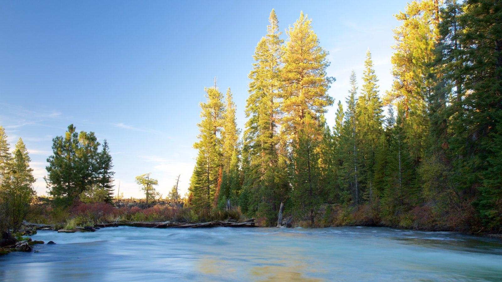 Deschutes National Forest ofreciendo un río o arroyo y escenas forestales