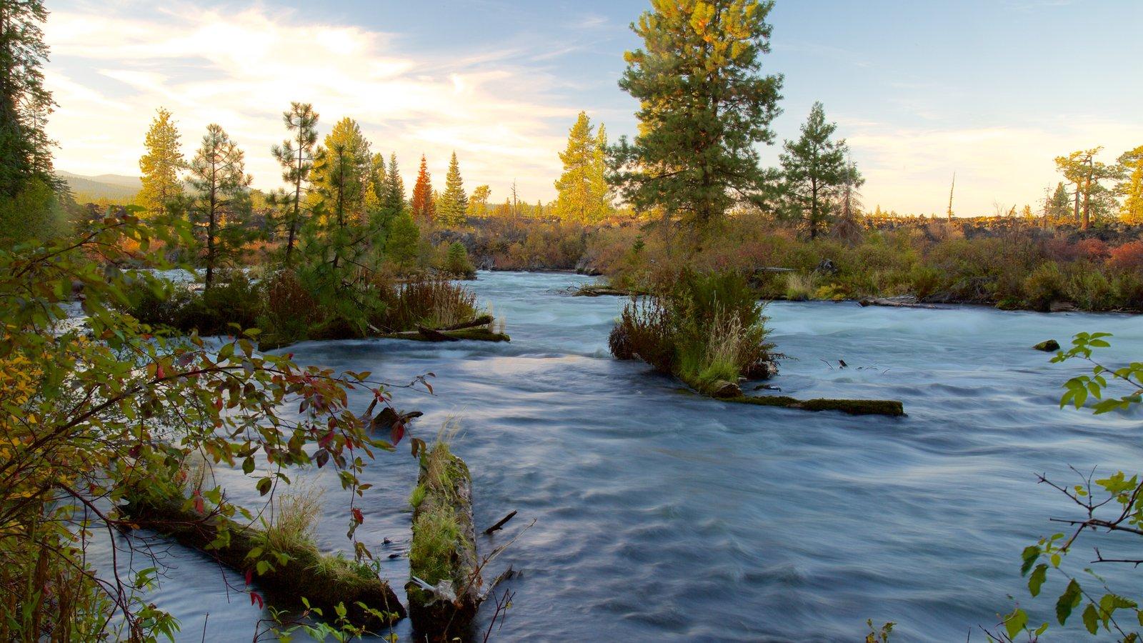 Deschutes National Forest que incluye hojas de otoño, rápidos y bosques
