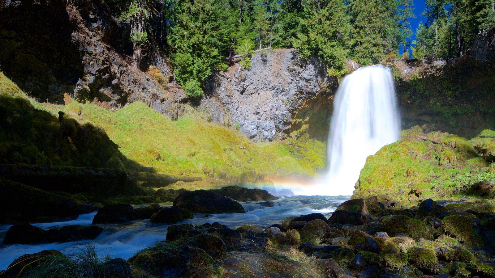 Bosque Nacional Willamette ofreciendo un río o arroyo y una catarata