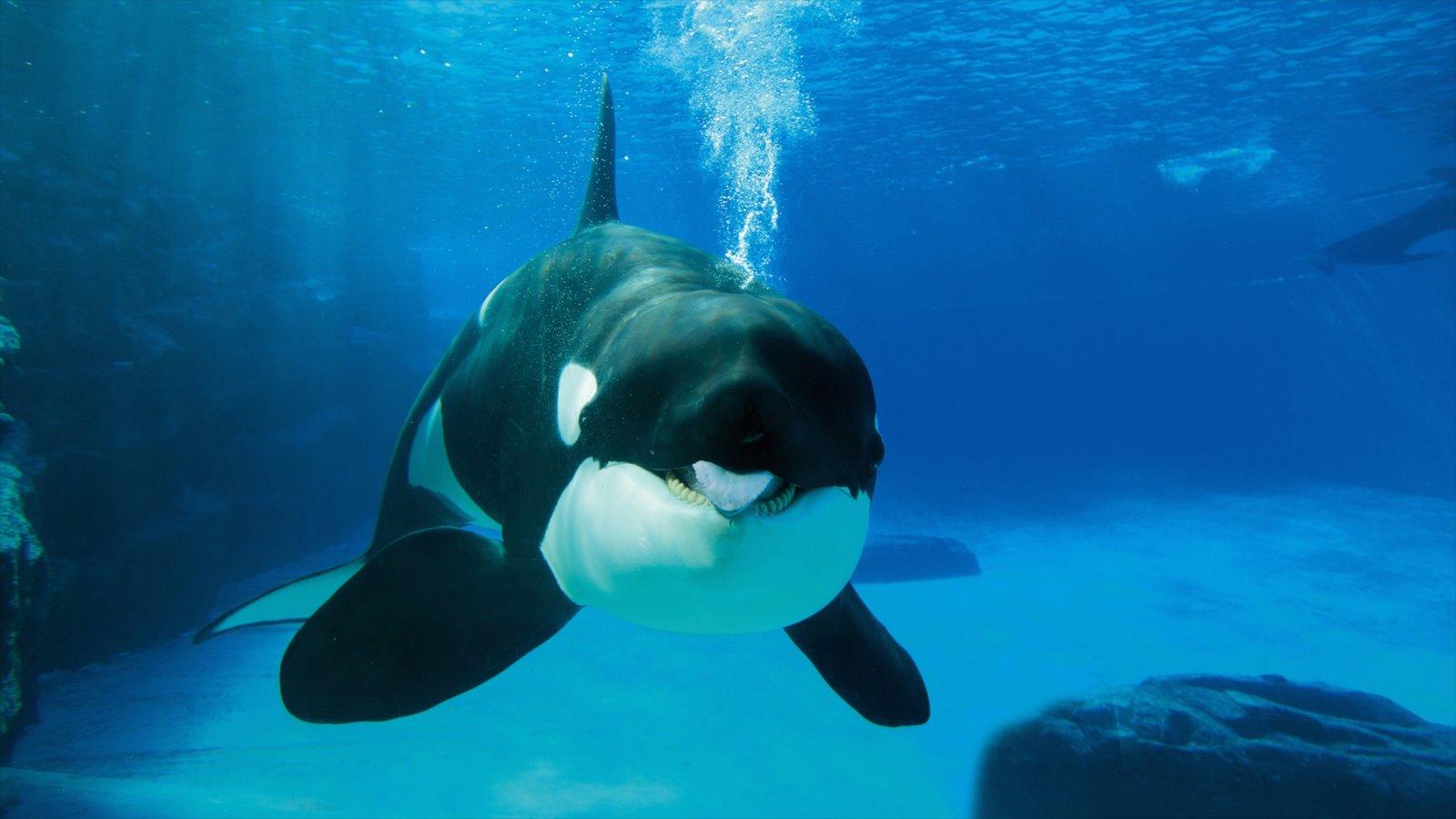 Marineland caracterizando vida marinha, passeios e animais de zoológico