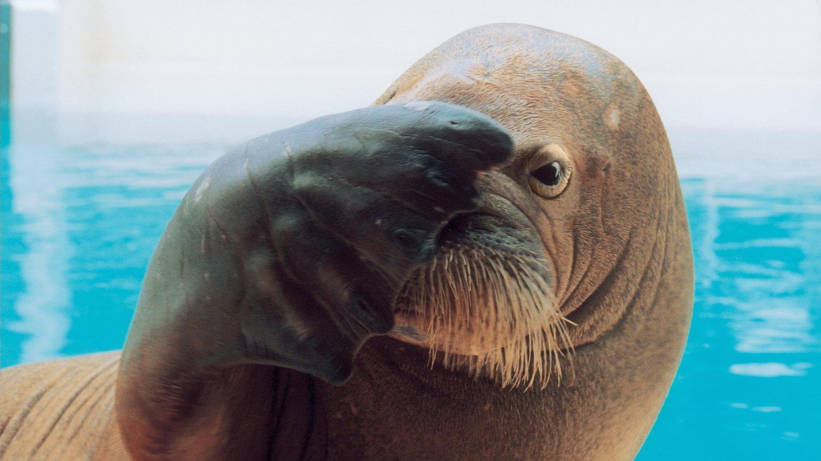 Marineland caracterizando vida marinha, animais de zoológico e passeios
