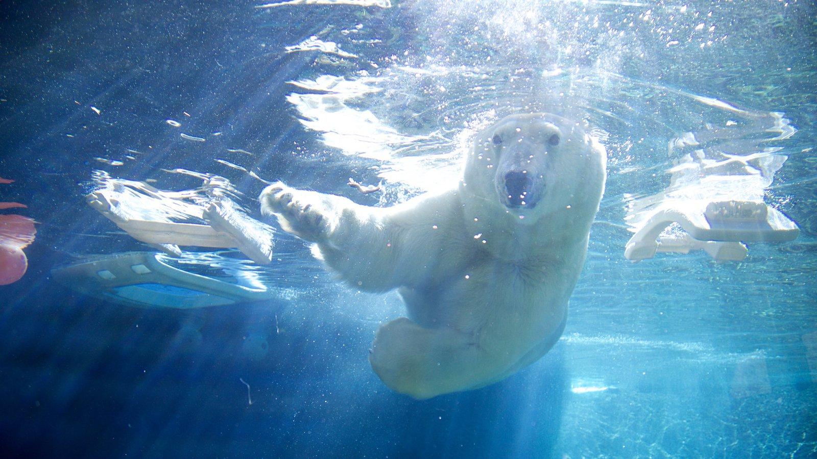 Point Defiance Zoo and Aquarium mostrando vida marinha