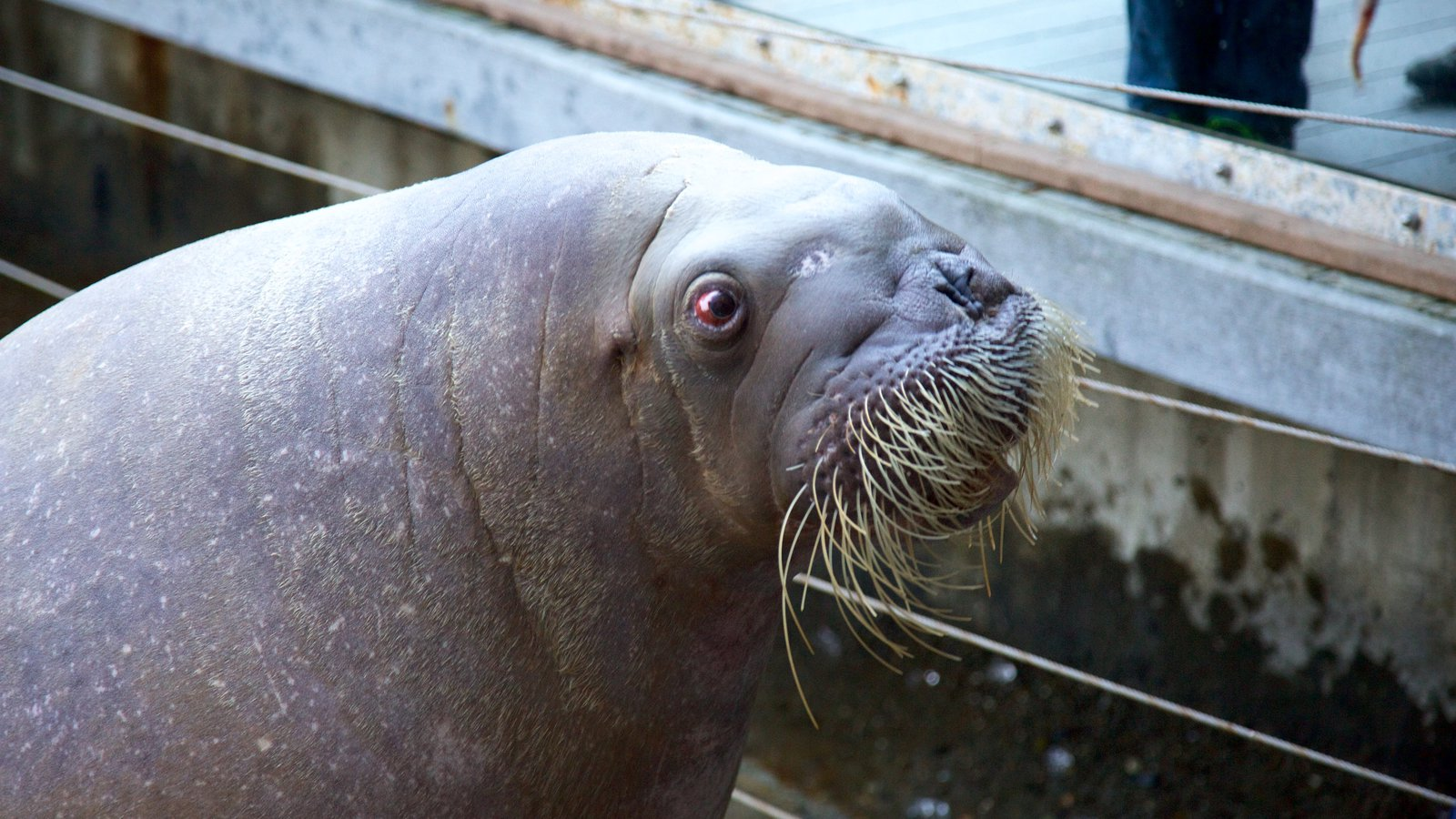 Point Defiance Zoo And Aquarium Pictures View Photos
