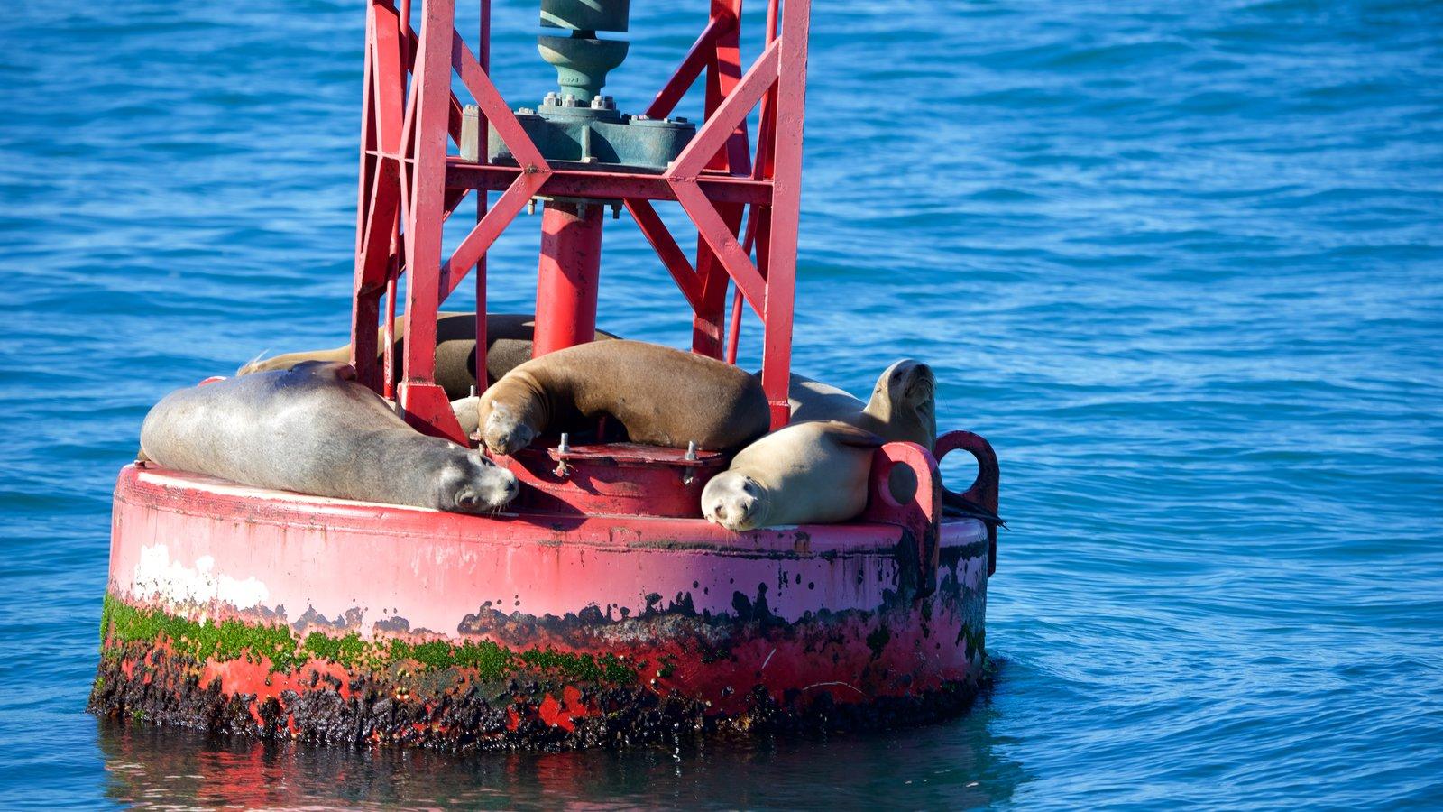 Ventura Harbor que inclui animais