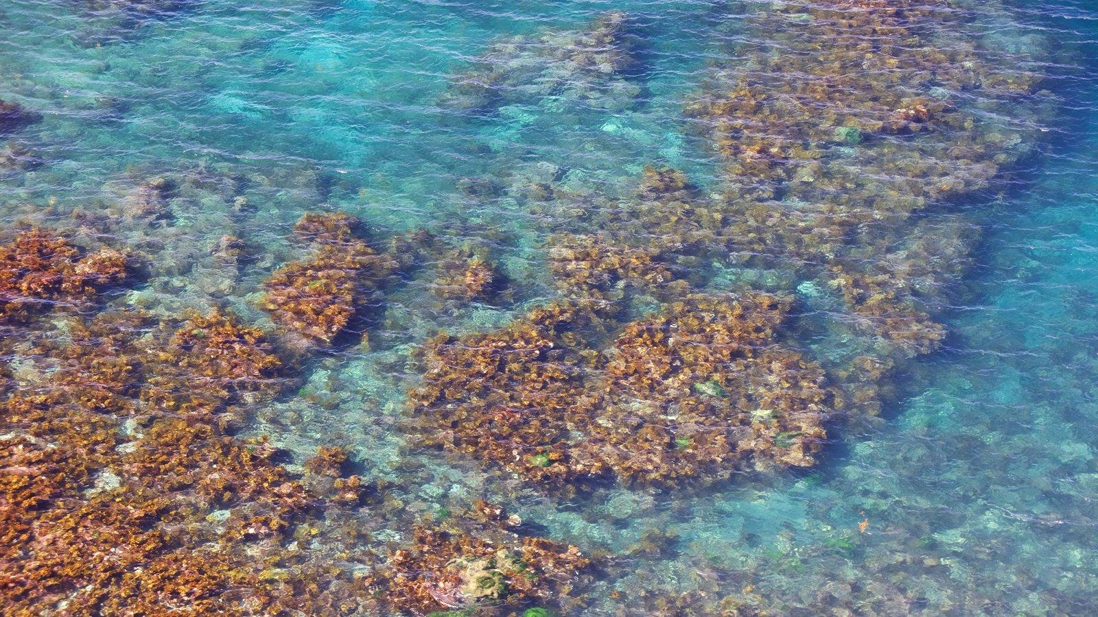 Parque Nacional de Channel Islands mostrando coral e paisagens litorâneas