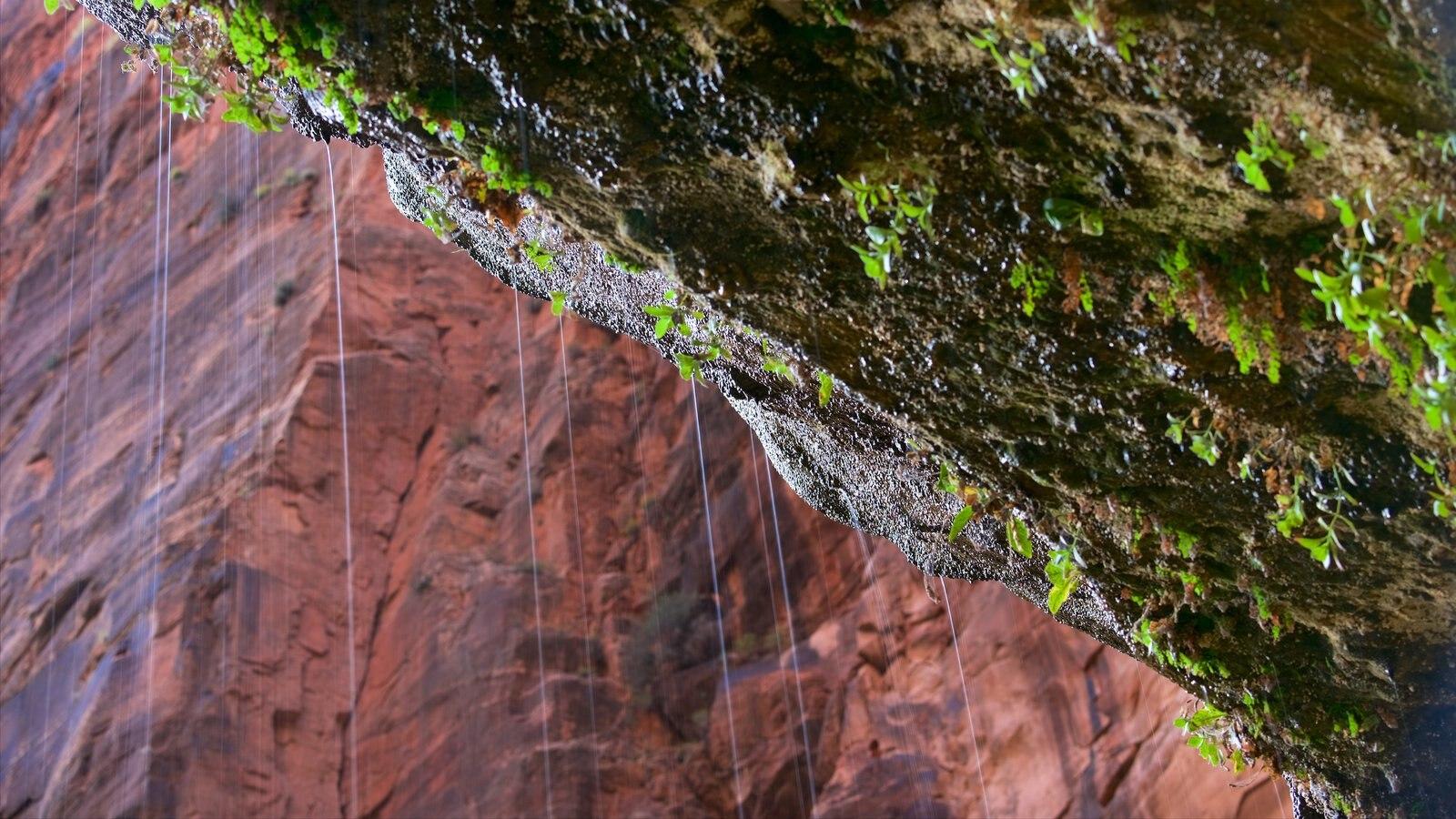 Parque Nacional Zion ofreciendo escenas tranquilas