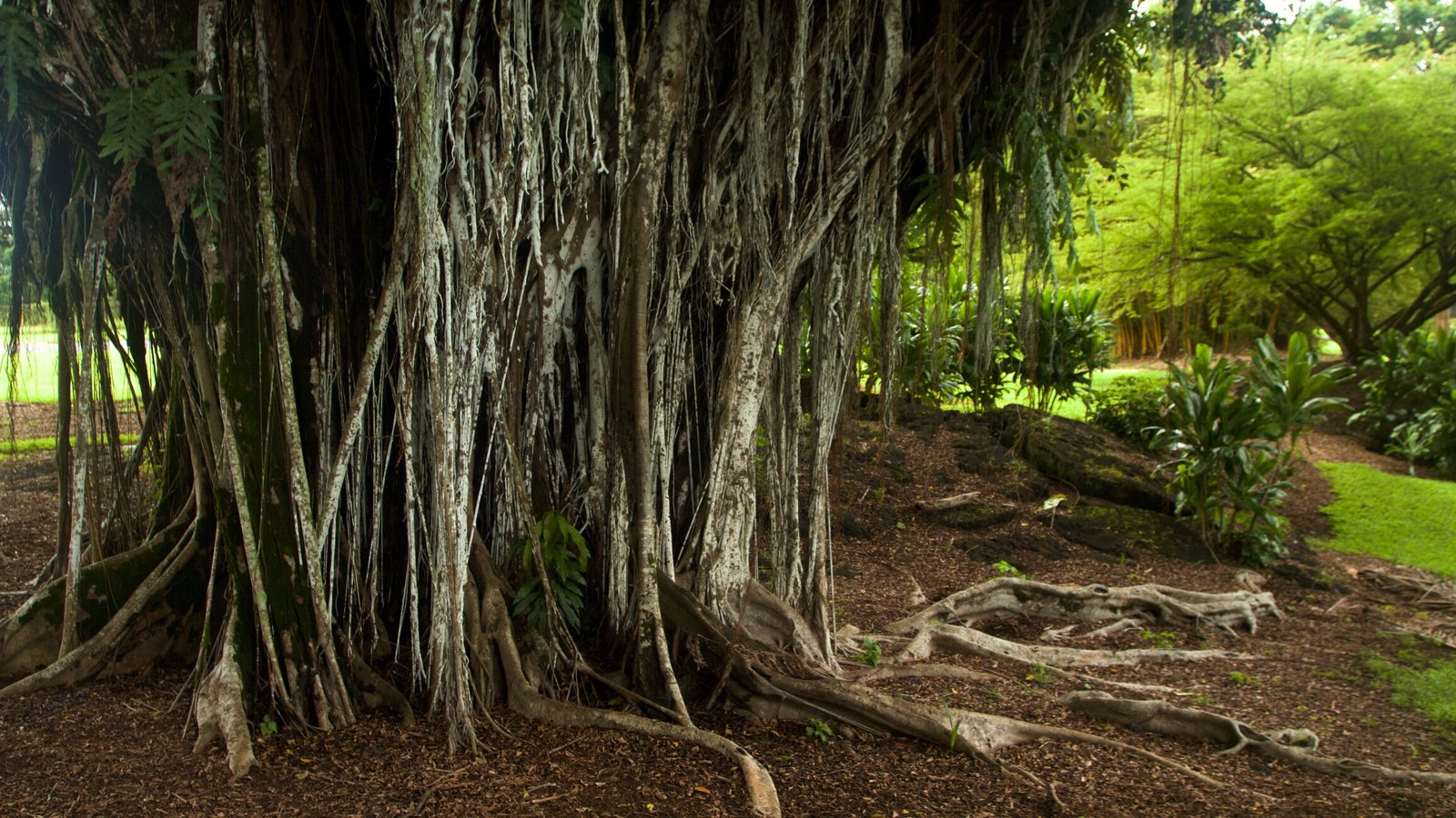 Liliuokalani Park and Gardens Pictures: View Photos & Images of ...