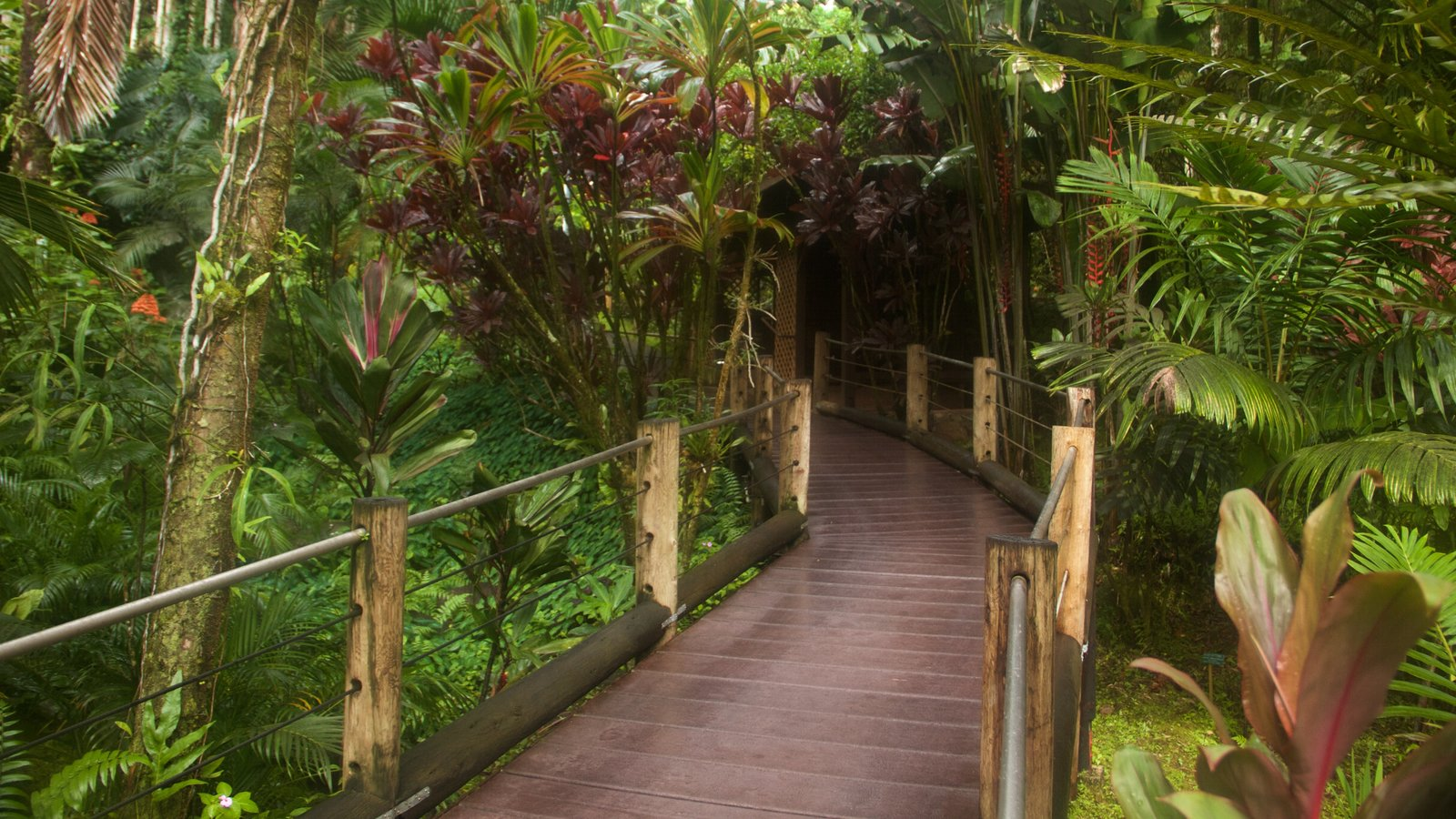 Gardens & Parks Pictures: View Images of Hawaii Tropical Botanical ...