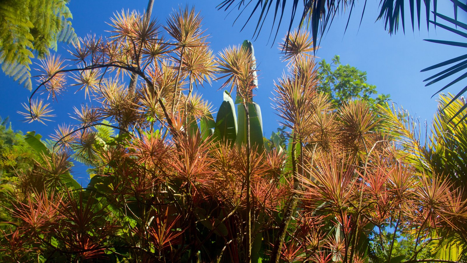 Flowers Pictures: View Images of Hawaii Tropical Botanical Garden