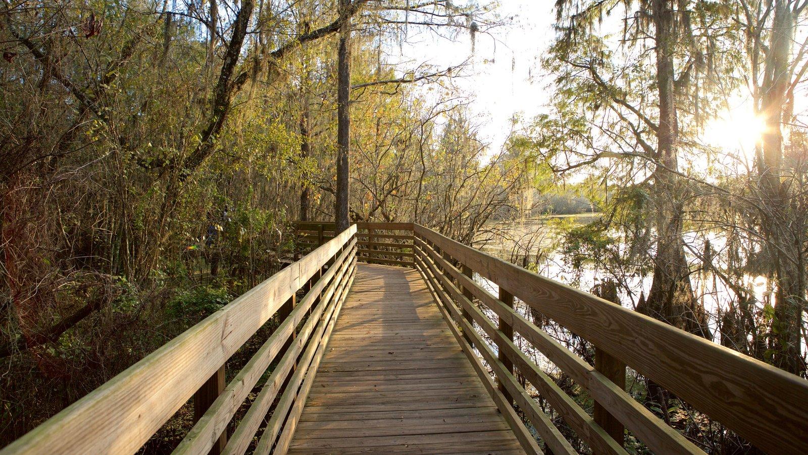 Tampa which includes a bridge