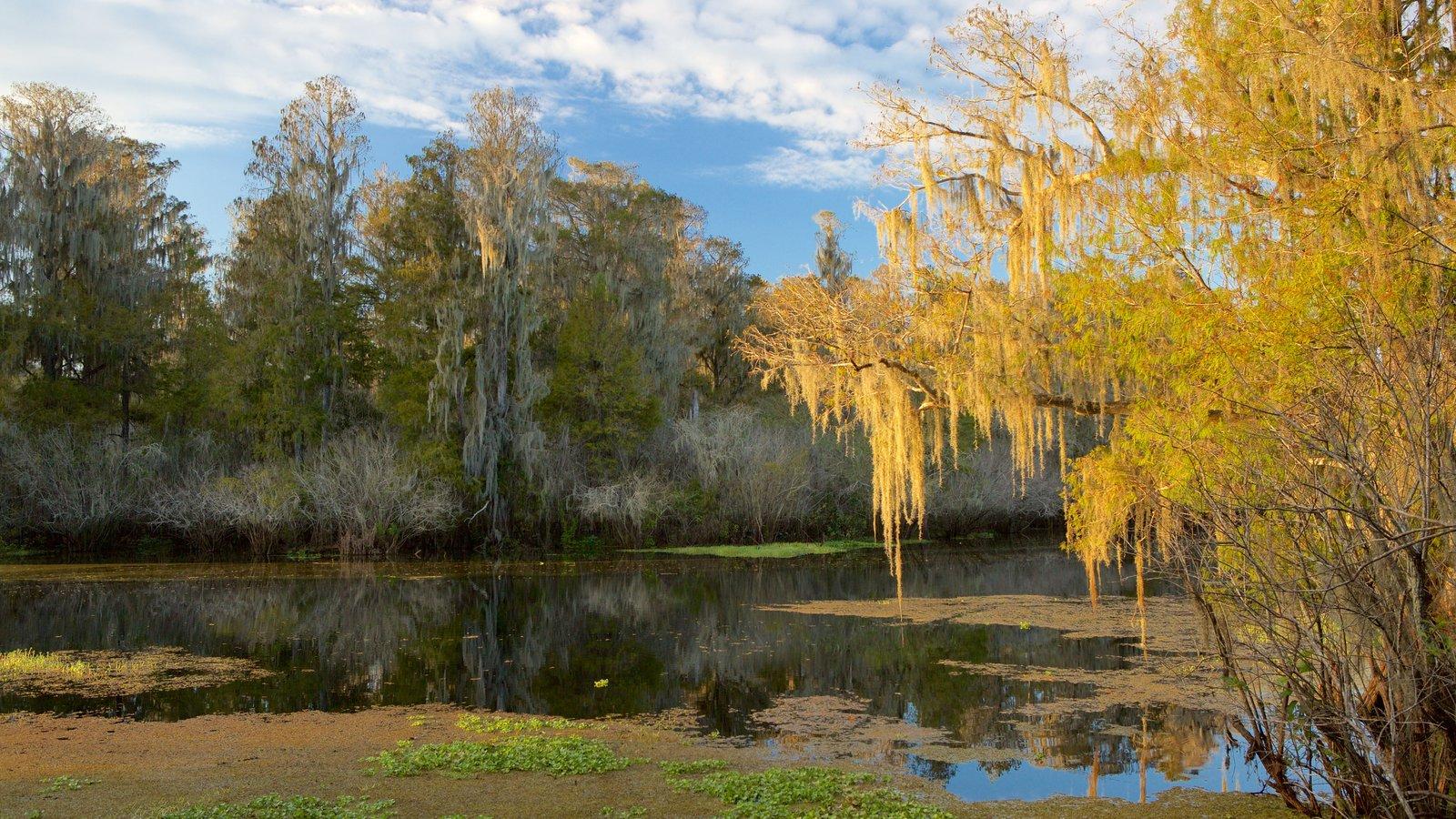 Tampa showing a lake or waterhole