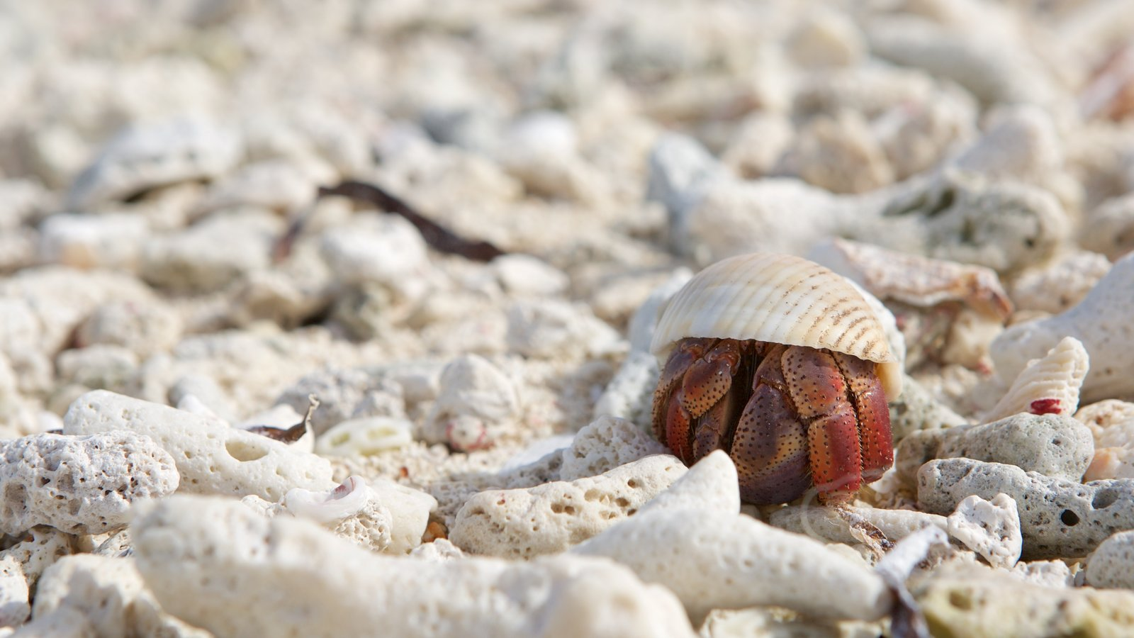 Dry Tortugas National Park mostrando vida marinha